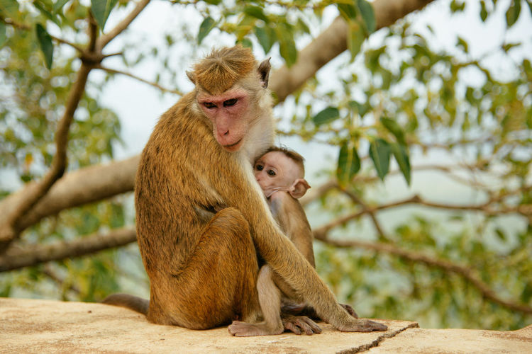 Animal Animal Wildlife Sitting Monkey Young Animal Cute Animals In The Wild Care Outdoors Day Mammal Togetherness No People Nature Baboon Sri Lanka 🇱🇰 SriLanka Sri Lanka Srilanka Photography Monkeys EyeEmNewHere