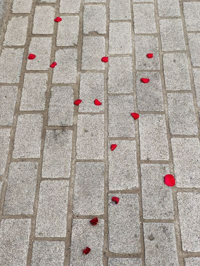 High angle view of red flowers on footpath