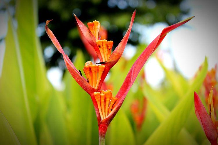 Red Flower Panamá Macro_flower Macro Photography Macro Beauty