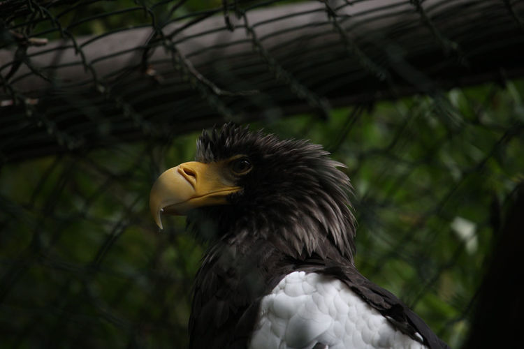 Close-up of a bird looking away