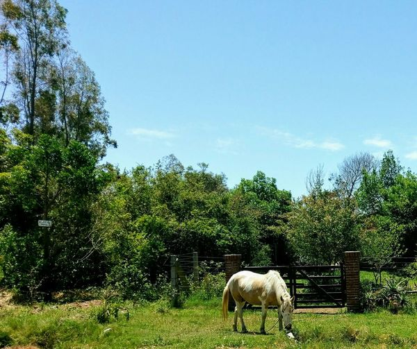 Tree Nature Horse Animal Themes Outdoors No People Sky Day Horse Life Nature Tree One Animal