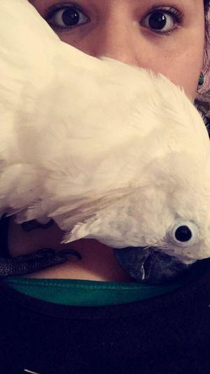 my baby Buttons. UmbrellaCockatoo Cockatoo Bird Pets Exoticbird