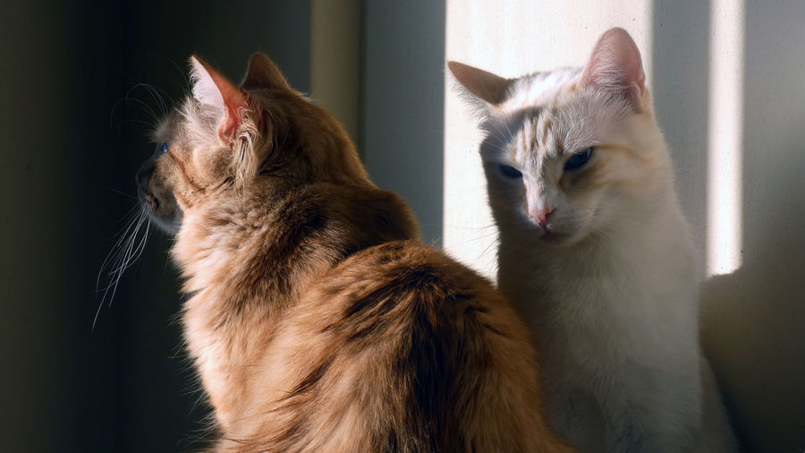 Close-up of cats at home