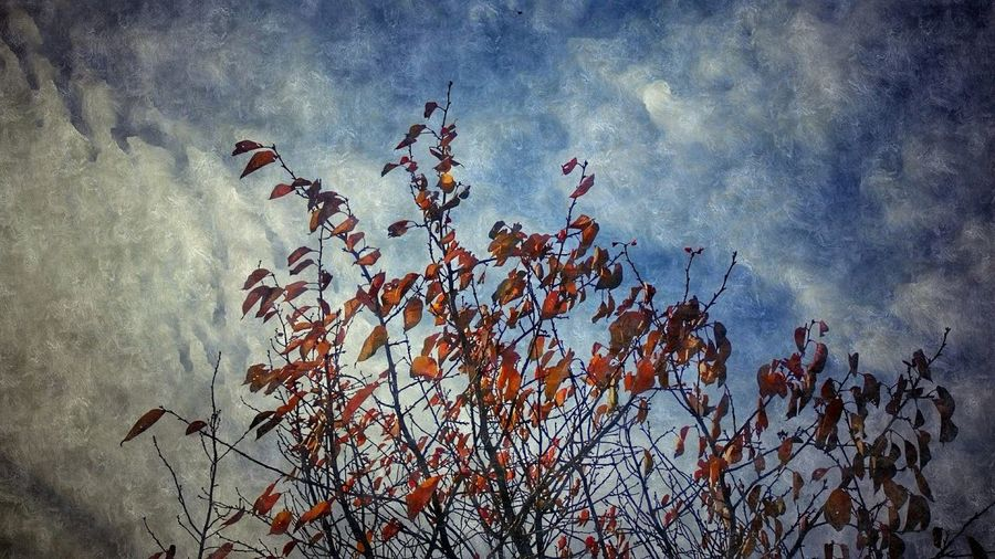 Last of the colour ( arty ) Skyporn Showcase: December Light Artistic Photography Eye4photography  EyeEmBestPics Eeyem And Gety Original Photography Creative Pattern, Texture, Shape And Form Pattern Texture Popularpage Popular Photos