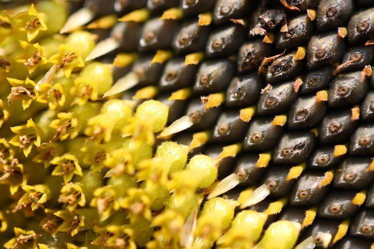 Full Frame Shot Of Yellow Plant