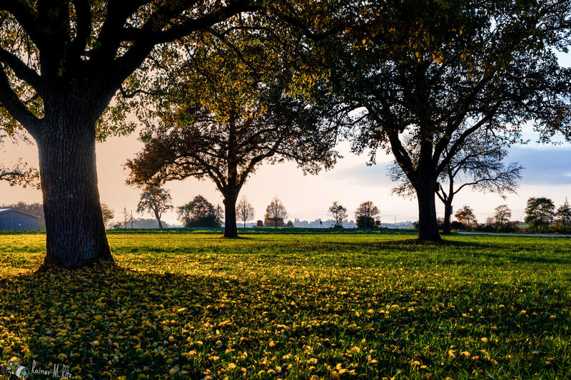 The golden laves laying on the ground Autumn Leaves Trees Beauty Of Nature Oberjessingen Awesome Light
