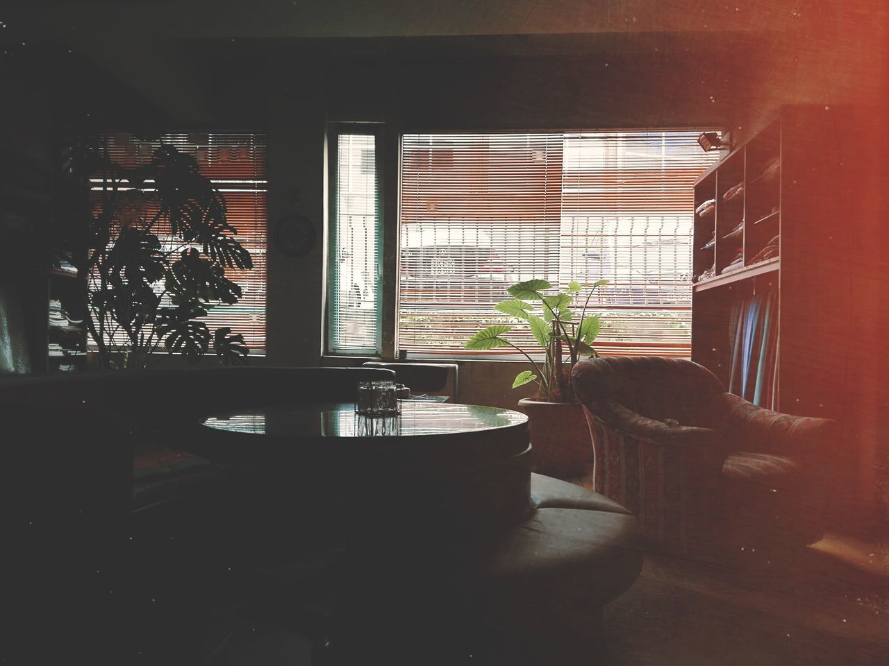 window, potted plant, indoors, plant, table, home interior, no people, growth, day, architecture