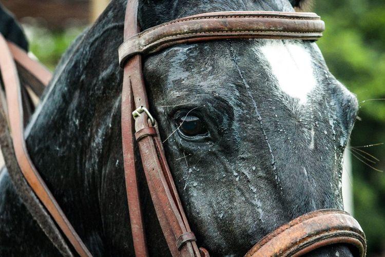 Outdoors EyeEm Selects One Animal Close-up Polo Horse Photography  Horse Riding Animal Eye Animal Love Black Ajax Horse