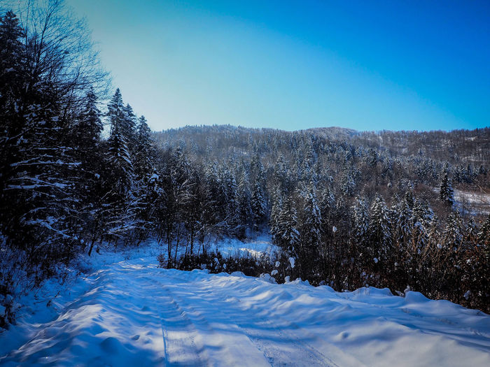 Bieszczady Mountains Beauty In Nature Bieszczady Blue Cold Temperature Day Environment Land Landscape Mountain Nature No People Non-urban Scene Plant Scenics - Nature Sky Snow Snowcapped Mountain Tranquil Scene Tranquility Tree Winter