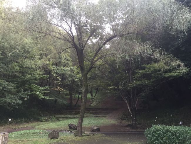 Park Relaxing Green