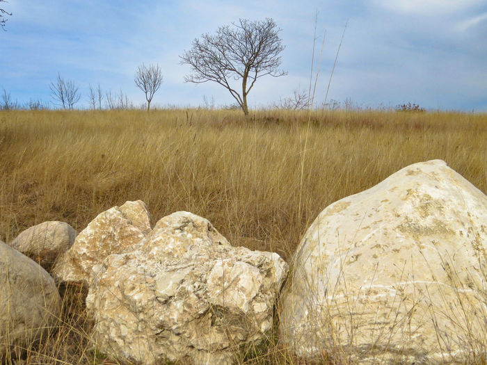 Yellow Grass Boundary Stone Stones Tree Bare Tree Rock Tranquility Land Landscape Sky Nature No People Grass Cloud - Sky Rock - Object Outdoors Scenics - Nature Field Tranquil Scene Day