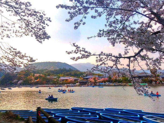 嵐山 京都 日本 川 桂川 自然 船 夕方 イマソラ 空 桜 桜の木 景色 Japan Kyoto Arashiyama Sunset River Nature Naturelovers Spring 夕方のそら Tree Water Sky