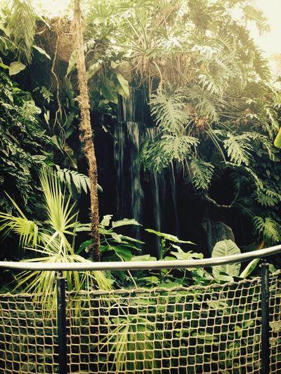 Wilhelma Waterfall Topical Trip