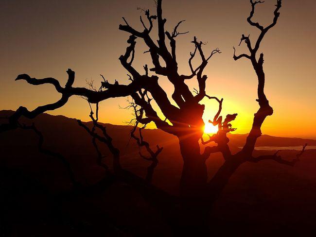 Corsica Sun Soleil Love Tree Sunset Silhouette Branch Sunlight Rural Scene Mountain Tree Area Sun Tree Trunk