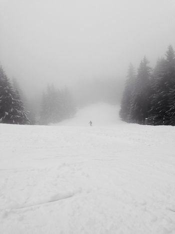 Lone skier Skier Empty Places Snow Tree Lined