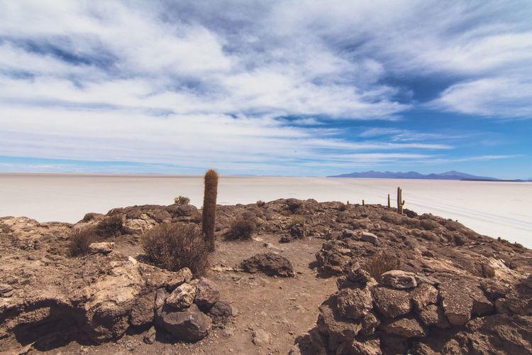 Isla Incahuasi - The Bolivian Salt Flats Beach Blue Cacti Cactus Cactus Flower Cactus Garden Cactus Paradise Cloud - Sky Horizon Horizon Over Water Isla Incahuasi Nature Non-urban Scene Rock - Object Scenics Sea Sky Tokina 11-16 Mm F/2,8 Tourism Tranquil Scene Tranquility Uyuni Uyuni - Island Of Salt Uyuni Salt Flat Water