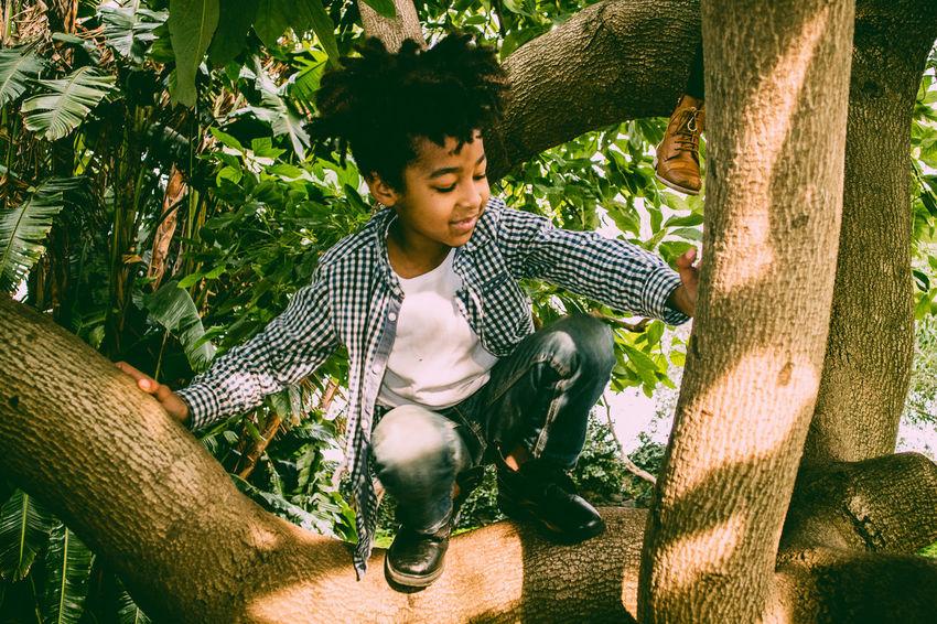 8-year-old color kid with rasta hair plays happy climbing up an avocado tree Avocado Tree Joyful Nature RASTA RastaBoy Afro-american Afrohair Black Boy Branch Climbing Climbing Trees Kid Playing Smiling Springtime Summer Sun