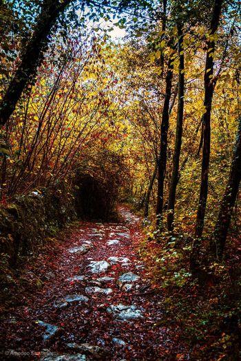 Autumn Tree The