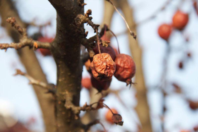 Dry Fruit Fruit