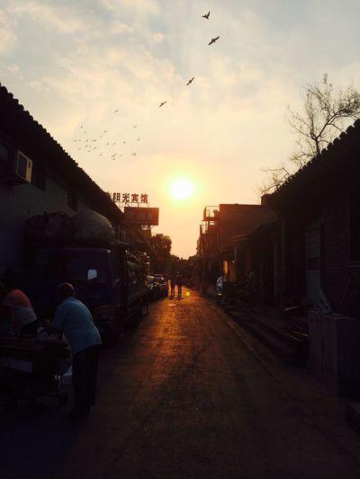 胡同,鸽子,夕阳