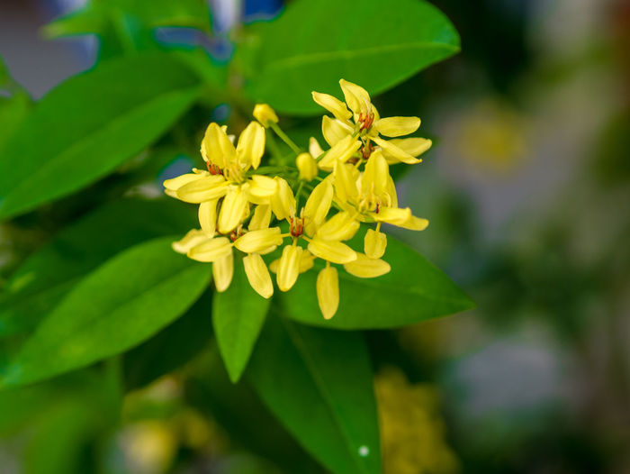 Flower view Flowering Plant Flower Plant Freshness Beauty In Nature Fragility Growth Vulnerability  Petal Flower Head Inflorescence Close-up Yellow Plant Part Leaf Nature Day Focus On Foreground Green Color No People Outdoors Pollen