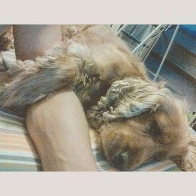 She is hugging me.. 🐾😘😍😆 Layla Love Cute Cuteness Best  Dog Beautiful Beauty Beautifuldog Mylove Puppy Peluche Sleeping Likeforher