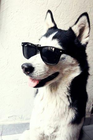 Dogs :) Smile Boy :D
