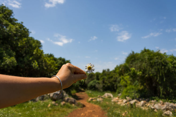 Cropped hand of woman holding daisy against sky at park