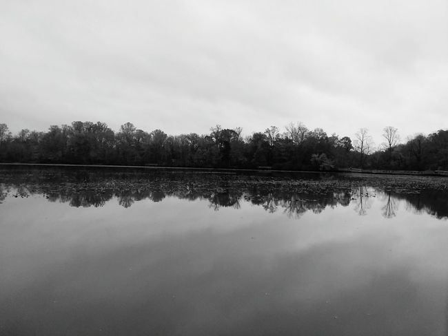 Reflection Lake Nature Tree Water Autumn Sky Forest Outdoors No People Day Blackandwhite Photography Tranquility Beauty In Nature Freshness Cloud - Sky Beauty In Ordinary Things Front View Outside Photography