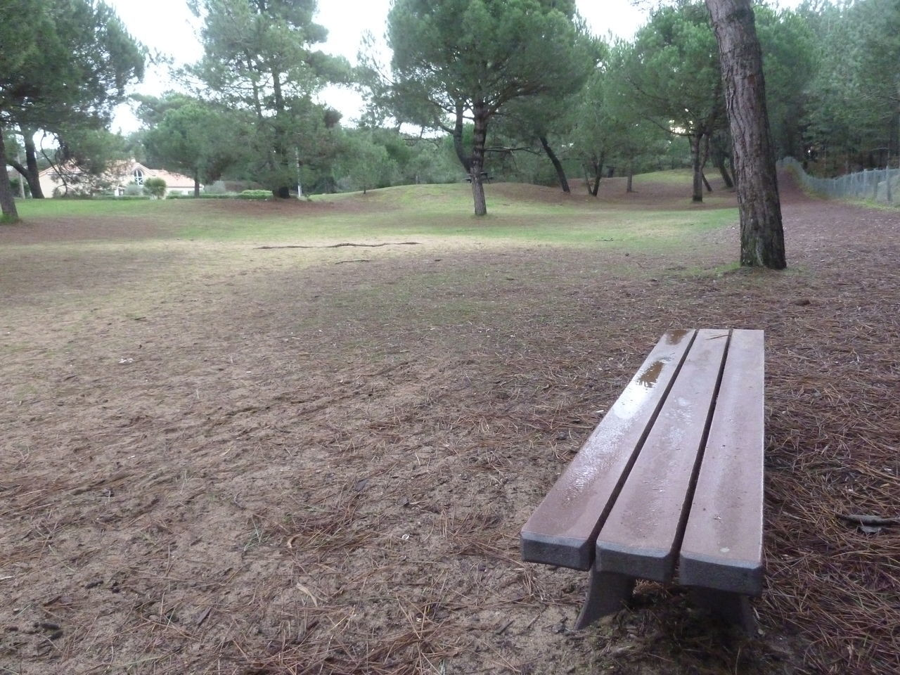 tree, plant, grass, land, nature, no people, absence, day, landscape, tranquility, park, field, tranquil scene, environment, seat, empty, tree trunk, trunk, bench, growth, outdoors