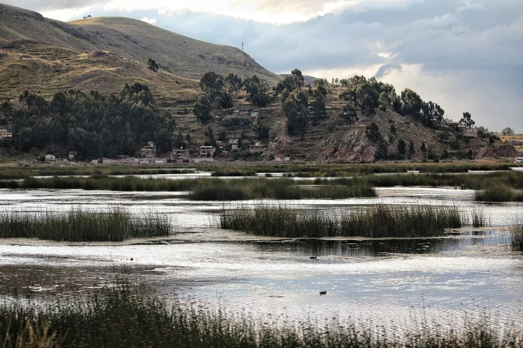 Titicaca lake Partener Selection Tree Mountain Water Rural Scene Agriculture Rice Paddy Lake Field Reflection Sky