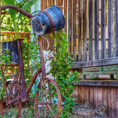 Rusty Wood -