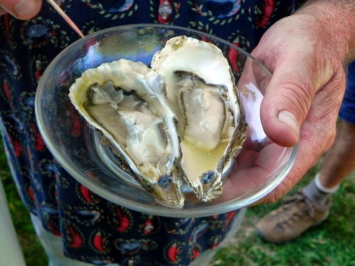 oysters with a