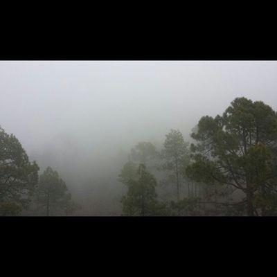 Ayer Dia De Candelaria Mar De Nubes Pinos 📷