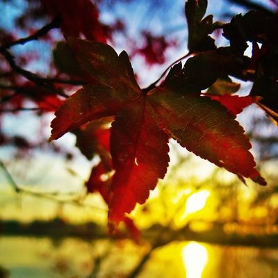 Just a Leaf Sydney Australia Newsouthwales Sunrise Huntervalley Travel Travelgram Iampangean Jobatheavenonearth @hillsidebeachclub