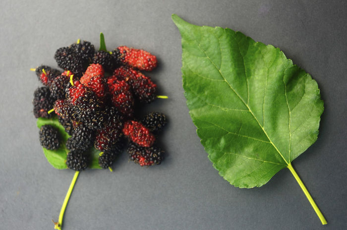 Leaf Healthy Eating Fruit Freshness Food And Drink Green Color No People Studio Shot Indoors  Close-up Red Food Nature Day Space Mulberry Protein Red Vitamin Delicious Sweet Ripe Freshness Backgrounds Food And Drink