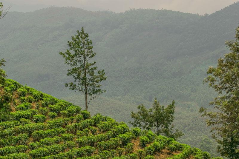 tea plantations Kerala The Gods Own Country ;) Kerala India Freshness Vacations Scenics Outdoors Beauty In Nature No People Nature Tree Power In Nature Munnar Kerala Teagardens India Idukki Landscapes MunnarHillstation