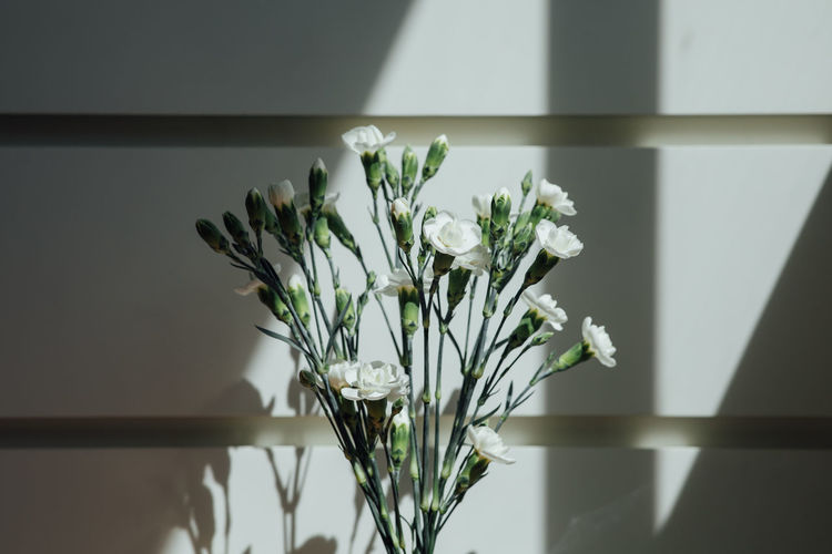 Close-up of white flowers in vase at home