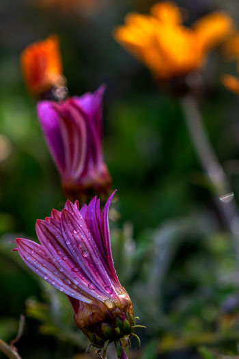 Flowering Plant Flower Plant Vulnerability  Beauty In Nature Fragility Petal Freshness Growth Close-up Flower Head Inflorescence Focus On Foreground No People Purple Nature Day Botany Selective Focus Outdoors Springtime Pollen