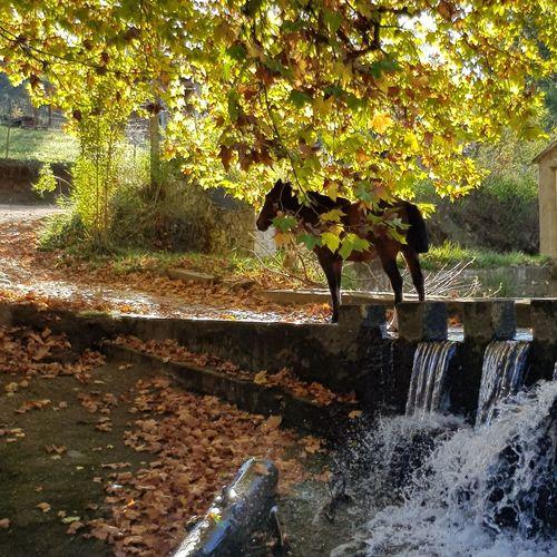 camuflaje Horse