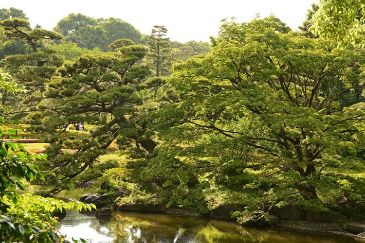 Imperial Palace Garden The Week On EyeEm Beauty In Nature Day Growth Outdoors Tokyo Photography Tree Water
