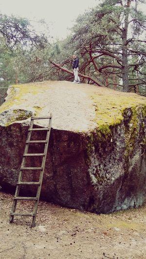 Autumn Men Rock - Object Forest Walking Hiking Estonia Strair