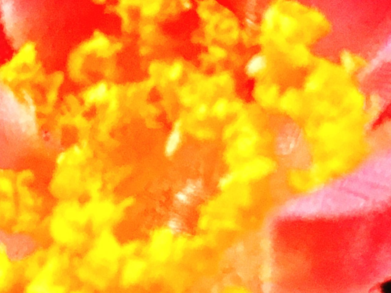 yellow, close-up, red, full frame, no people, backgrounds, indoors, day