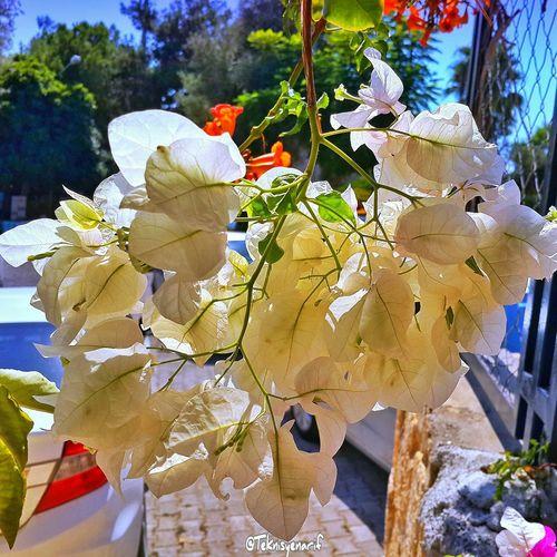 Güzel bir gün geçirmeniz dileğiyle selamlar Kas Habesoshotel Begonvil Flowers çiçek