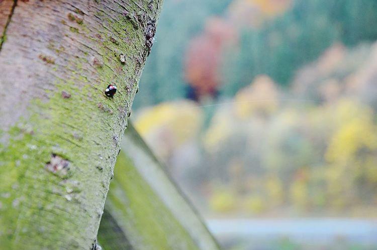 Ladybug Longwalk Photography Nurburgring
