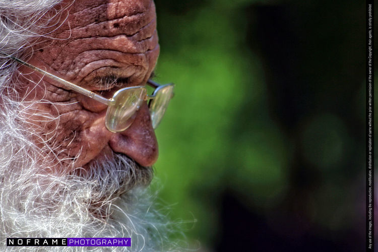 Aged Animal Head  Animal Themes Close-up Day Domestic Animals Elderly Focus On Foreground Grandfather Green Color Nature No People Noframe.photography Old Man Old Men One Animal Portrait Photography Vsokolov White Beard Wrinkled Skin Zoology