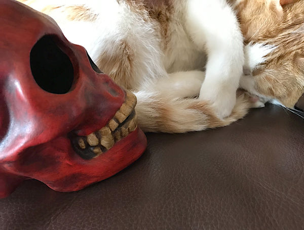 Amusing Cat Close-up Copy Space Covering Eyes Domestic Animals Feline Frightened  Fun Furry Halloween Indoors  Mammal Natural Light Nobody Orange And White Cat Pampered Pet Pet Scared Skull Sleeping Tabby