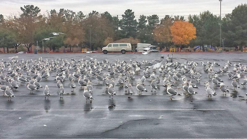Gulls Sunset Park parking lot paradise