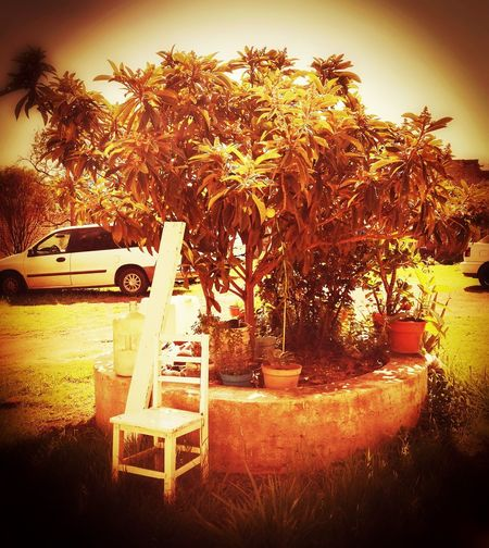 Silla Tree Nature