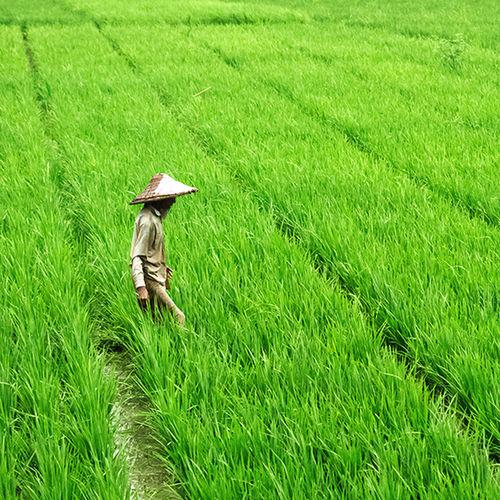 A happy farmer